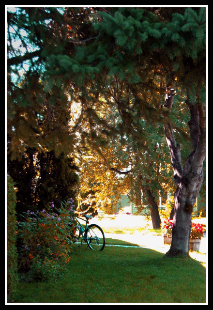 Bicicleta entre flores en Canadá