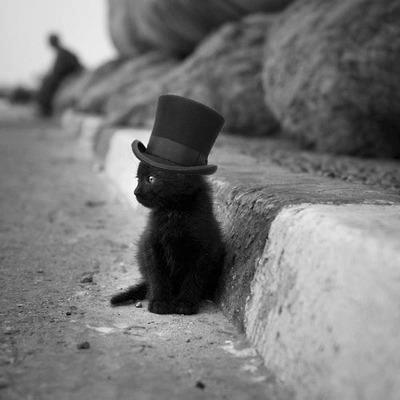 Gatito con sombrero